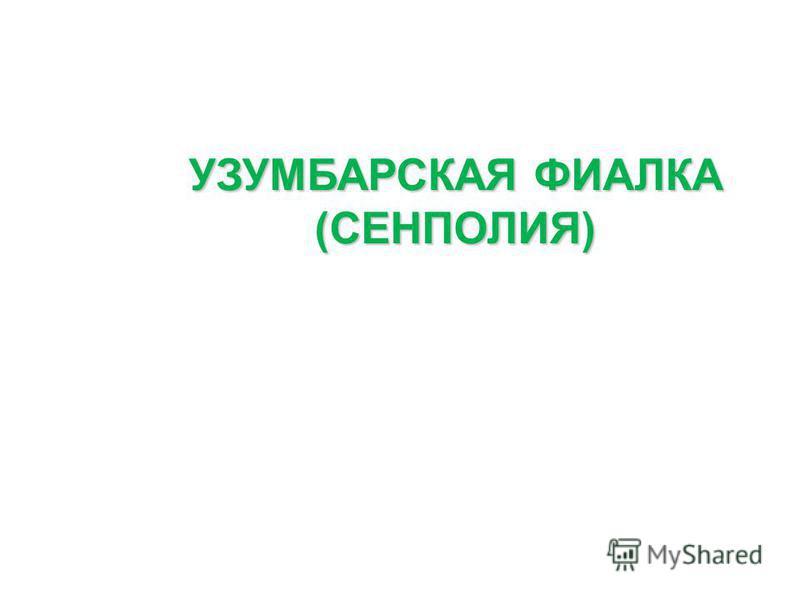 УЗУМБАРСКАЯ ФИАЛКА (СЕНПОЛИЯ)