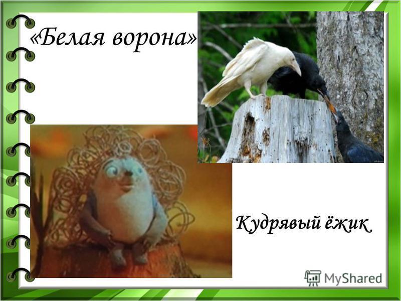«Белая ворона» Кудрявый ёжик
