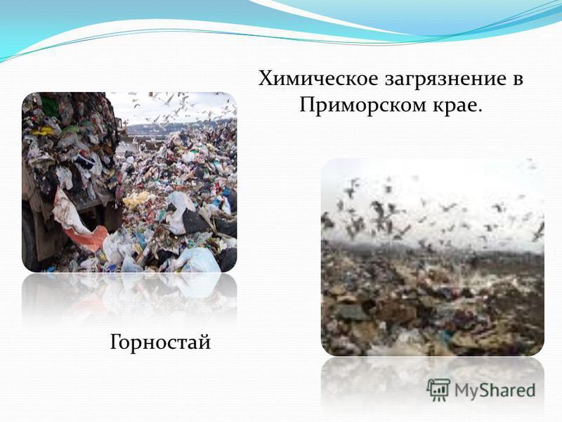 Химическое загрязнение в Приморском крае. Горностай