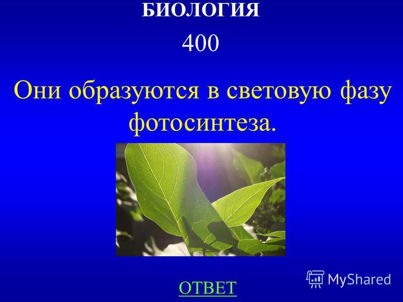 НАЗАДВЫХОД Азот, Кислород, Углерод, Водород. 300