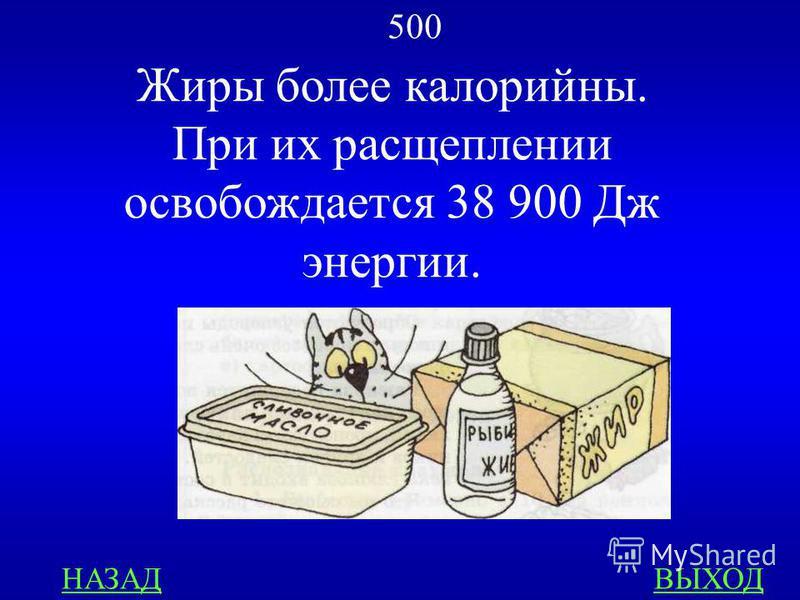 МЕДИЦИНА 500 Почему жители полярных стран употребляют много жирной пищи? ответ
