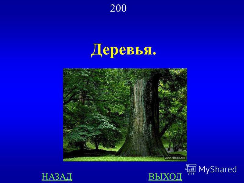 БИОЛОГИЯ 200 Назовите продуценты, которые в лесу создают основную массу биологической продукции ОТВЕТ