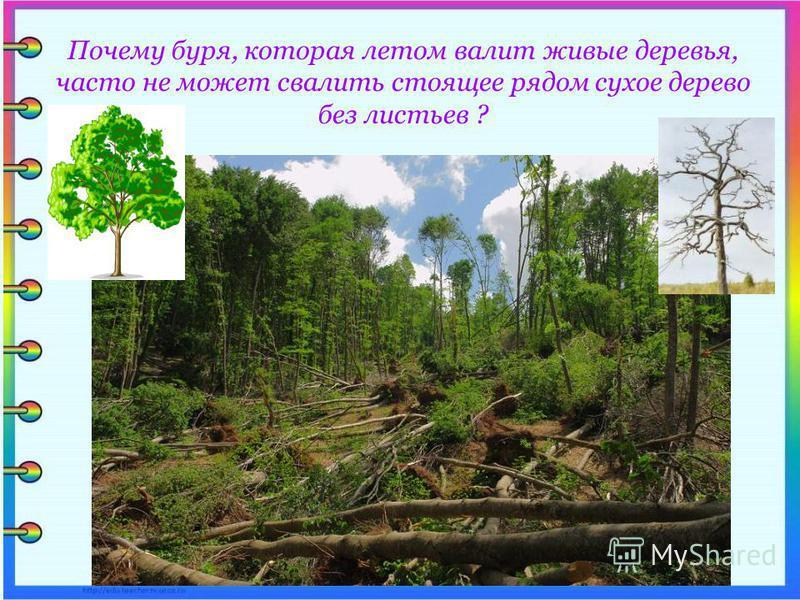 Почему буря, которая летом валит живые деревья, часто не может свалить стоящее рядом сухое дерево без листьев ?