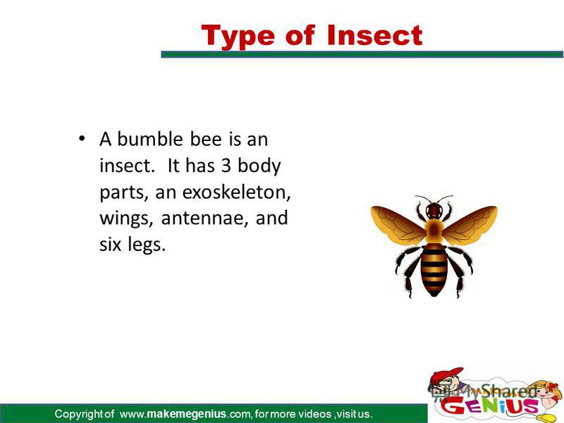 Copyright of www.makemegenius.com, for more videos,visit us. Insects must have six legs. Insects have three body parts called the head, thorax, and abdomen. Insects must have wings and antennae. A hard shell called an exoskeleton covers all insects.
