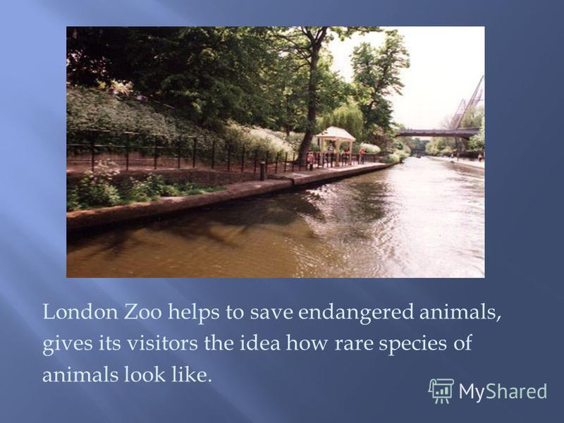 London Zoo helps to save endangered animals, gives its visitors the idea how rare species of animals look like.