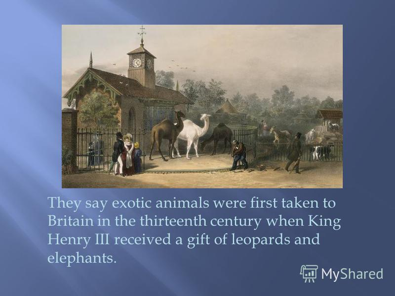 They say exotic animals were first taken to Britain in the thirteenth century when King Henry III received a gift of leopards and elephants.