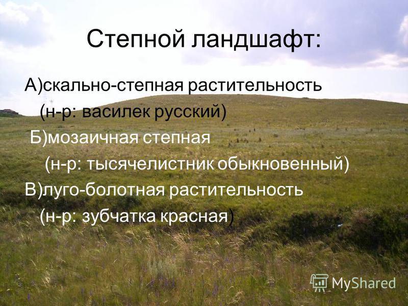Степной ландшафт: А)скально-степная растительность (н-р: василек русский) Б)мозаичная степная (н-р: тысячелистник обыкновенный) В)луге-болотная растительность (н-р: зубчатка красная)