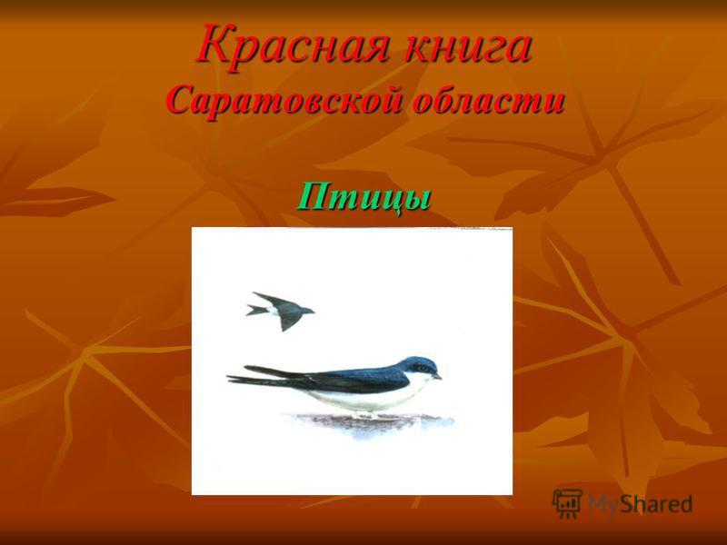 Красная книга Саратовской области Птицы