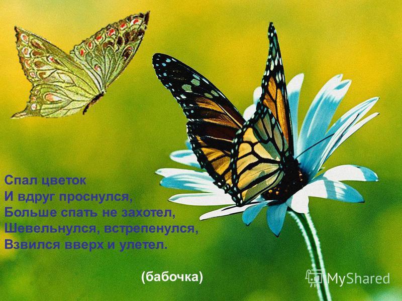 Спал цветок И вдруг проснулся, Больше спать не захотел, Шевельнулся, встрепенулся, Взвился вверх и улетел. (бабочка) Спал цветок И вдруг проснулся, Больше спать не захотел, Шевельнулся, встрепенулся, Взвился вверх и улетел. (бабочка)