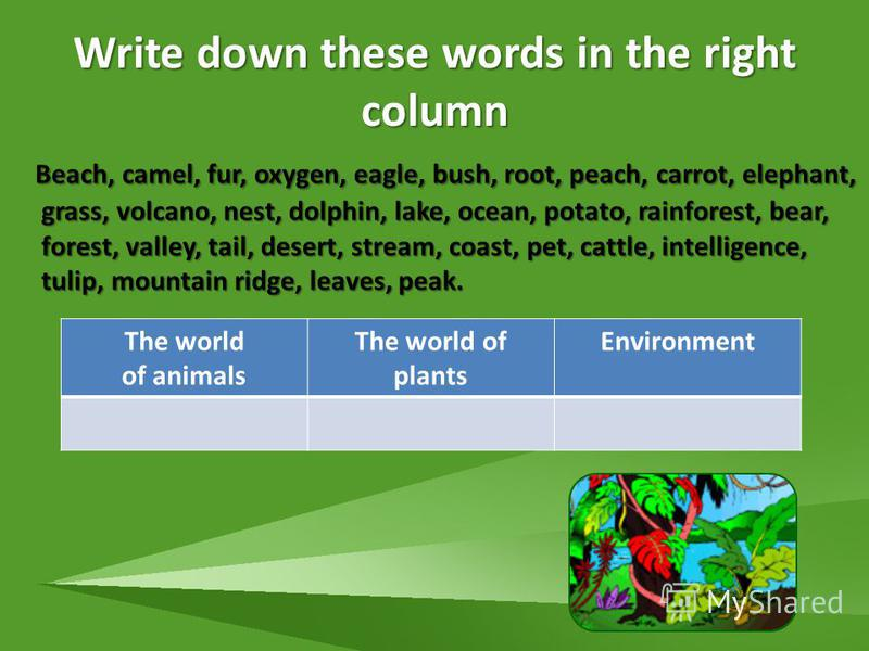 Write down these words in the right column Beach, camel, fur, oxygen, eagle, bush, root, peach, carrot, elephant, grass, volcano, nest, dolphin, lake, ocean, potato, rainforest, bear, forest, valley, tail, desert, stream, coast, pet, cattle, intellig