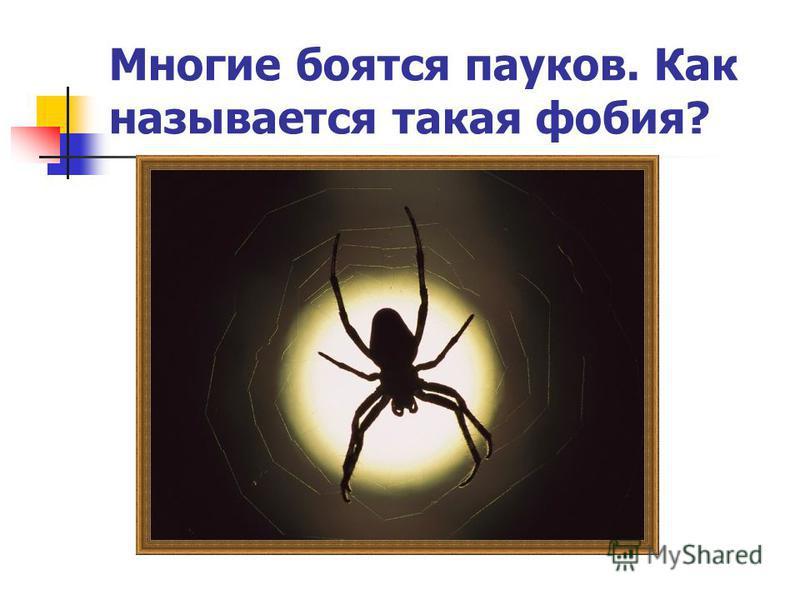 Многие боятся пауков. Как называется такая фобия?