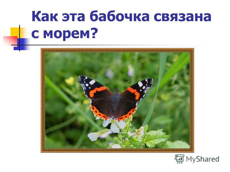 Как эта бабочка связана с морем?