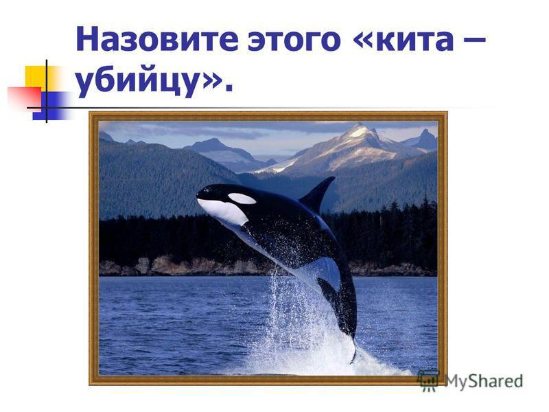 Назовите этого «кита – убийцу».