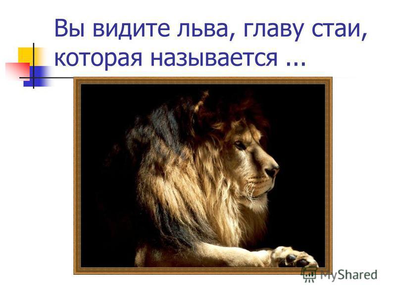 Вы видите льва, главу стаи, которая называется...