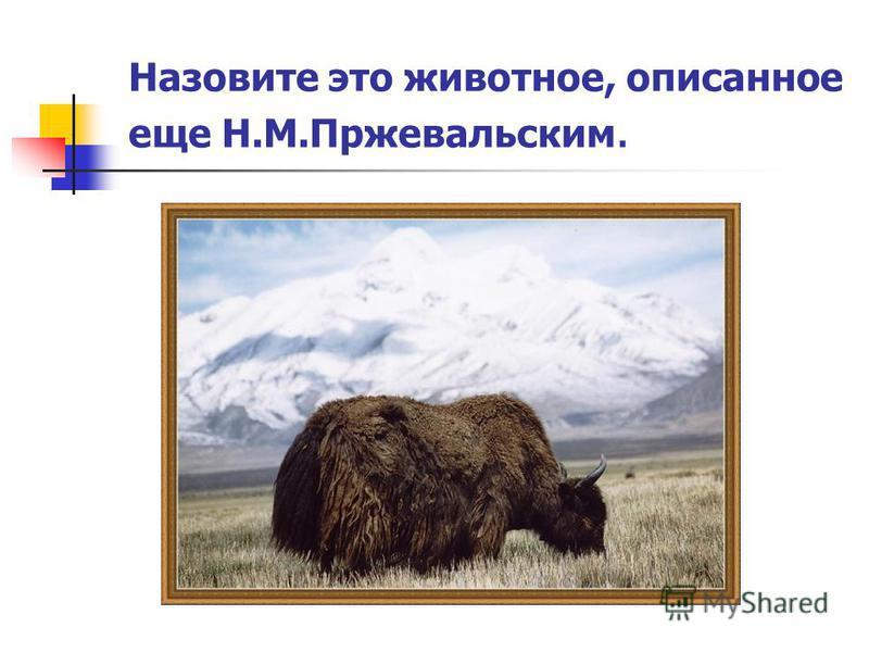 Назовите это животное, описанное еще Н.М.Пржевальским.