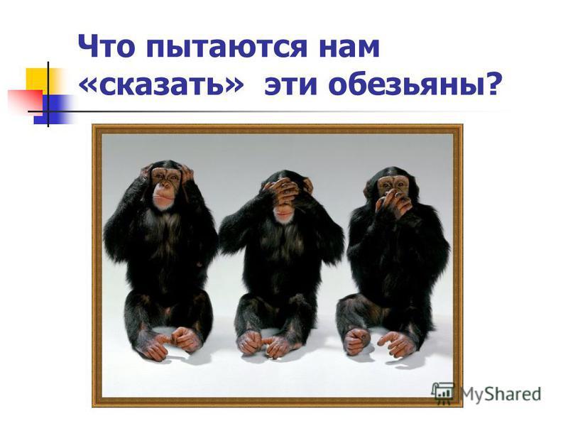 Что пытаются нам «сказать» эти обезьяны?