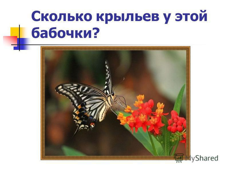 Сколько крыльев у этой бабочки?