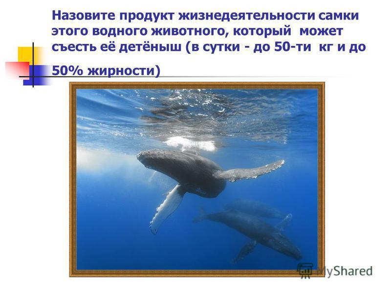 Назовите продукт жизнедеятельности самки этого водного животного, который может съесть её детёныш (в сутки - до 50-ти кг и до 50% жирности)