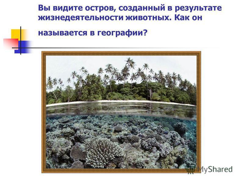 Вы видите остров, созданный в результате жизнедеятельности животных. Как он называется в географии?