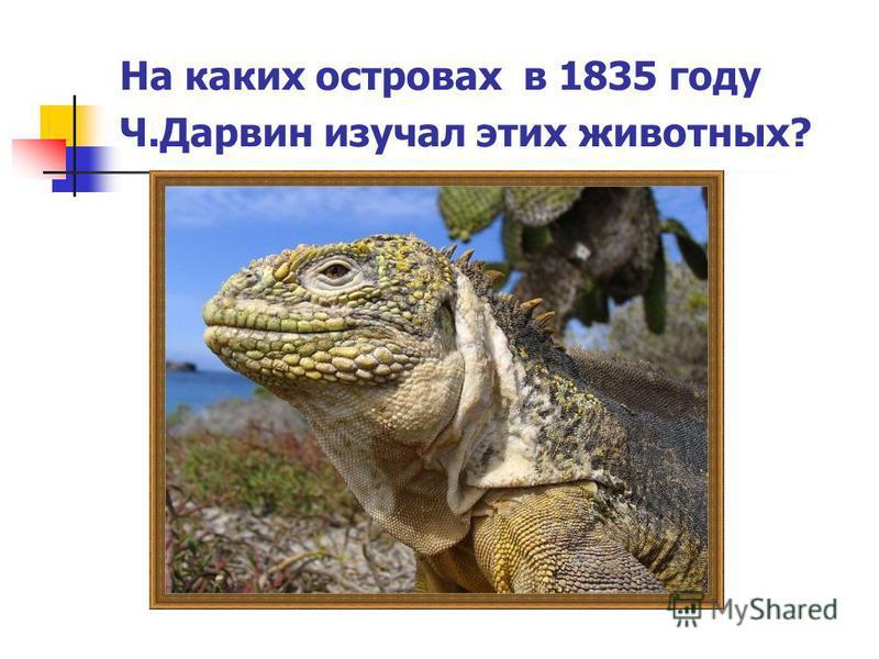 На каких островах в 1835 году Ч.Дарвин изучал этих животных?