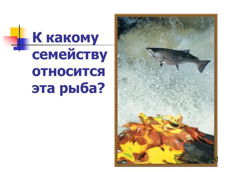К какому семейству относится эта рыба?