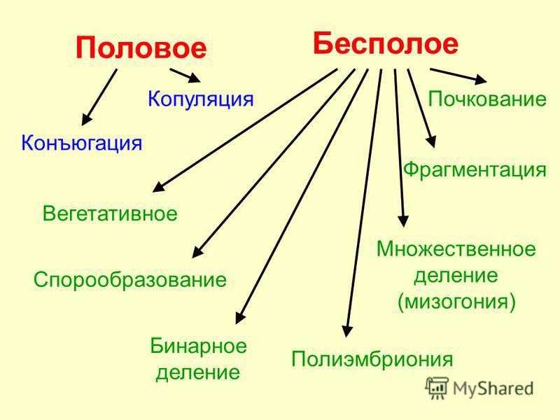 Половое Копуляция Конъюгация Бесполое Вегетативное Бинарное деление Множественное деление (мизогония) Полиэмбриония Почкование Фрагментация Спорообразование