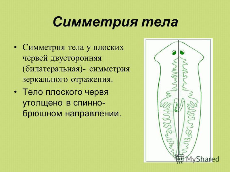 плоские паразиты в организме человека
