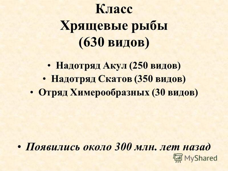 Класс Хрящевые рыбы (630 видов) Надотряд Акул (250 видов) Надотряд Скатов (350 видов) Отряд Химерообразных (30 видов) Появились около 300 млн. лет назад