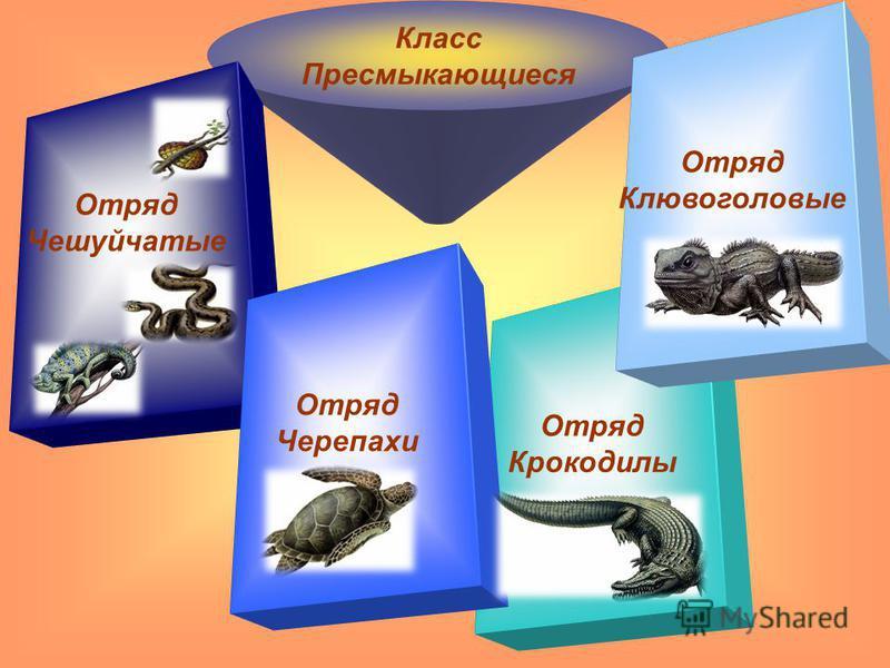 Класс Пресмыкающиеся Отряд Чешуйчатые Отряд Крокодилы Отряд Черепахи Отряд Клювоголовые