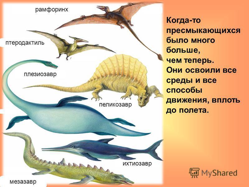 Когда-то пресмыкающихся было много больше, чем теперь. Они освоили все среды и все способы движения, вплоть до полета. рамфоринх птеродактиль пеликозавр плезиозавр ихтиозавр мезозавр
