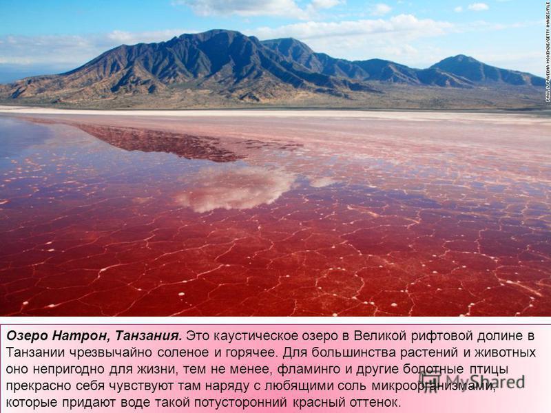 Озеро Натрон, Танзания. Это каустическое озеро в Великой рифтовой долине в Танзании чрезвычайно соленое и горячее. Для большинства растений и животных оно непригодно для жизни, тем не менее, фламинго и другие болотные птицы прекрасно себя чувствуют т