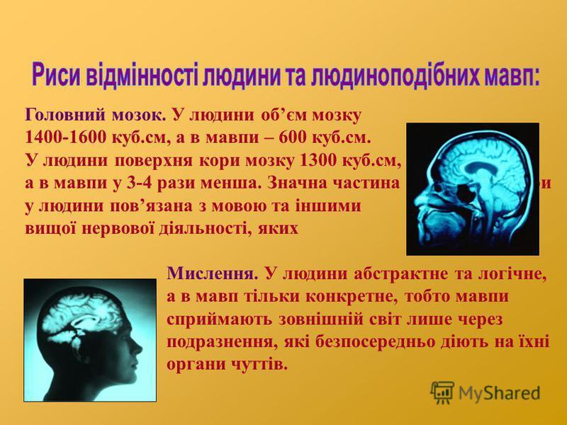 Головний мозок. У людини обєм мозку 1400-1600 куб.см, а в мавпи – 600 куб.см. У людини поверхня кори мозку 1300 куб.см, а в мавпи у 3-4 рази менша. Значна частина кори у людини повязана з мовою та іншими центрами вищої нервової діяльності, яких немає