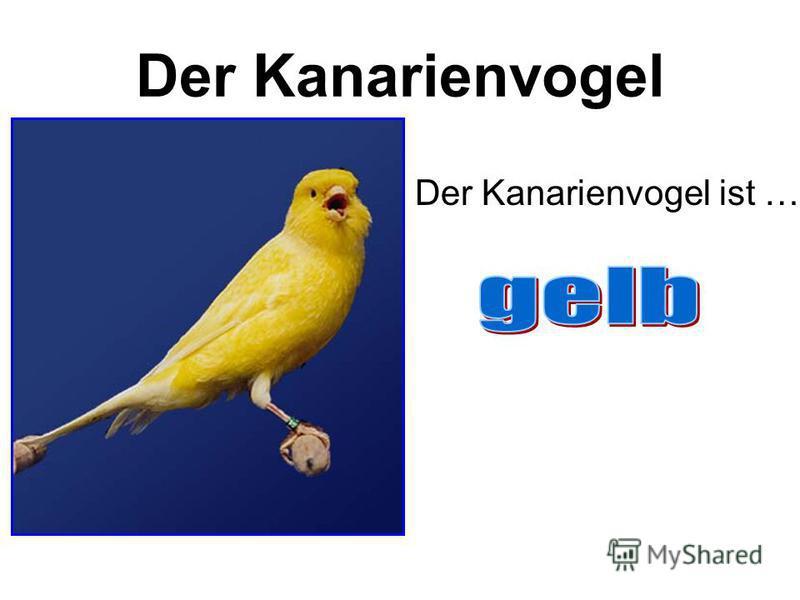 Der Kanarienvogel Der Kanarienvogel ist …