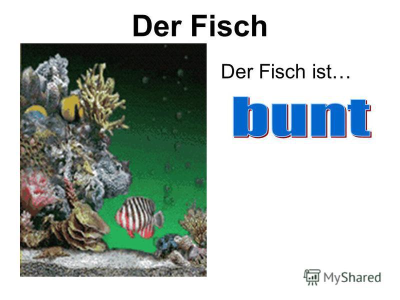Der Fisch Der Fisch ist…