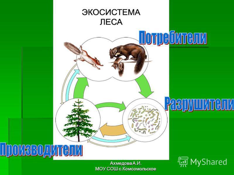 Ахмедова А.И. МОУ СОШ с.Комсомольское