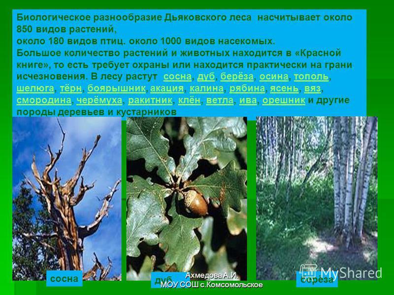 Биологическое разнообразие Дьяковского леса насчитывает около 850 видов растений, около 180 видов птиц. около 1000 видов насекомых. Большое количество растений и животных находится в «Красной книге», то есть требует охраны или находится практически н