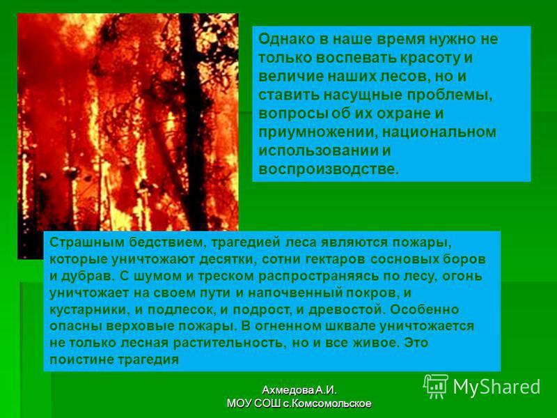 Однако в наше время нужно не только воспевать красоту и величие наших лесов, но и ставить насущные проблемы, вопросы об их охране и приумножении, национальном использовании и воспроизводстве. Страшным бедствием, трагедией леса являются пожары, которы