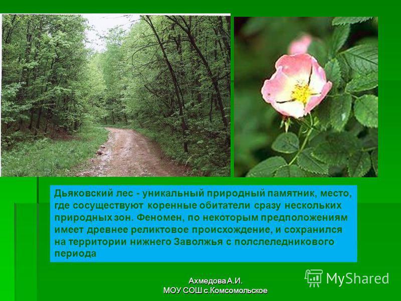 Дьяковский лес - уникальный природный памятник, место, где сосуществуют коренные обитатели сразу нескольких природных зон. Феномен, по некоторым предположениям имеет древнее реликтовое происхождение, и сохранился на территории нижнего Заволжья с посл