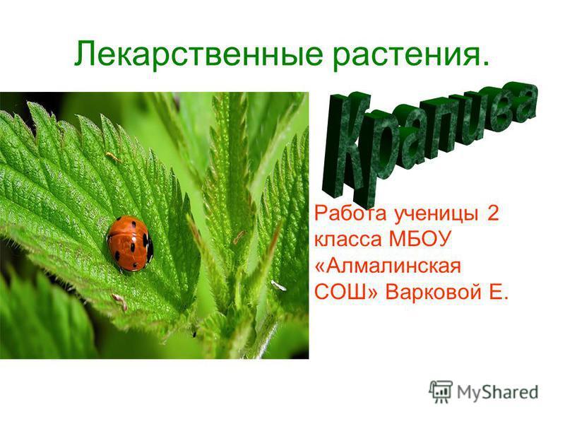 Лекарственные растения. Работа ученицы 2 класса МБОУ «Алмалинская СОШ» Варковой Е.