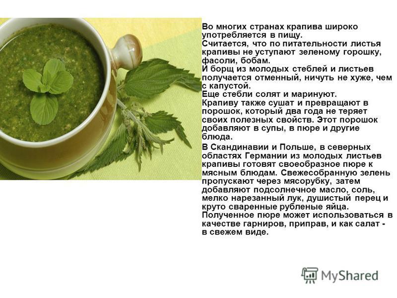 Во многих странах крапива широко употребляется в пищу. Считается, что по питательности листья крапивы не уступают зеленому горошку, фасоли, бобам. И борщ из молодых стеблей и листьев получается отменный, ничуть не хуже, чем с капустой. Еще стебли сол
