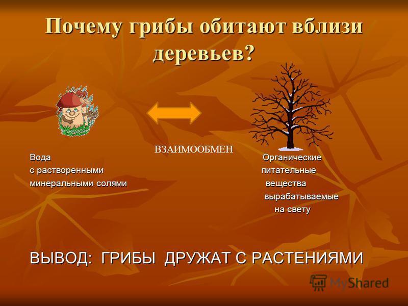 Почему грибы обитают вблизи деревьев? Вода Органические с растворенными питательные минеральными солями вещества вырабатываемые вырабатываемые на свету на свету ВЫВОД: ГРИБЫ ДРУЖАТ С РАСТЕНИЯМИ ВЗАИМООБМЕН