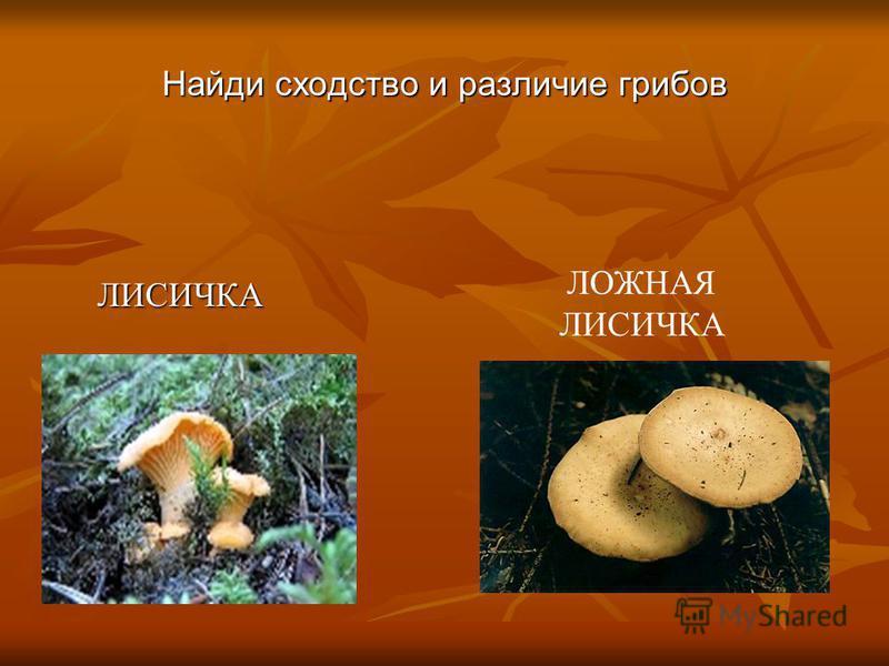 ЛИСИЧКА ЛИСИЧКА ЛОЖНАЯ ЛИСИЧКА Найди сходство и различие грибов