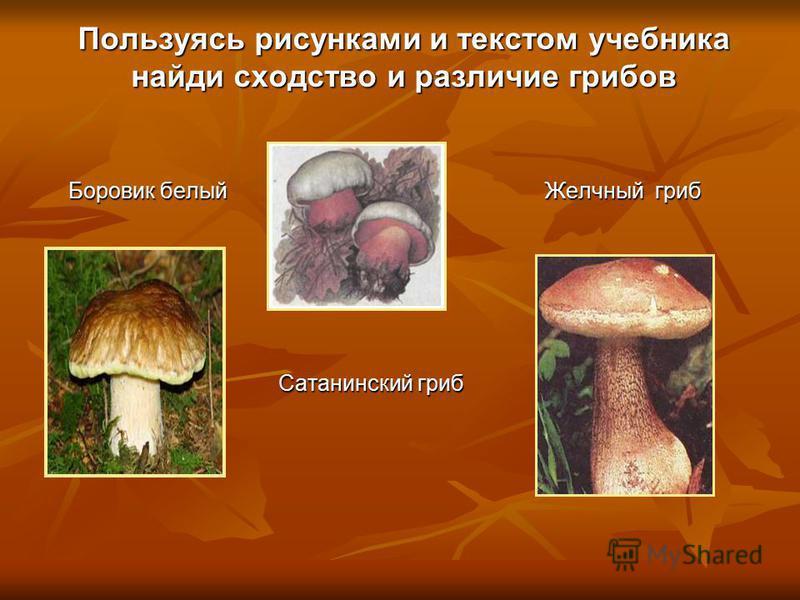 Пользуясь рисунками и текстом учебника найди сходство и различие грибов Боровик белый Желчный гриб Сатанинский гриб Сатанинский гриб
