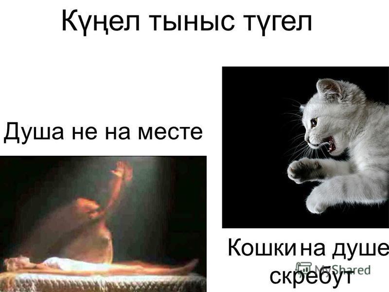 Душа не на месте Күңел тыныс түгел Кошки на душе скребут