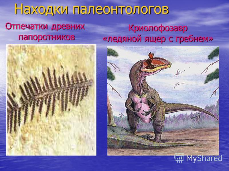 Находки палеонтологов Криолофозавр «ледяной ящер с гребнем» Отпечатки древних папоротников папоротников