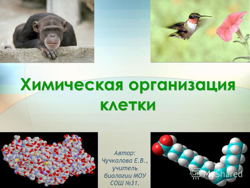 1 Химическая организация клетки Автор: Чучкалова Е.В., учитель биологии МОУ СОШ 31.