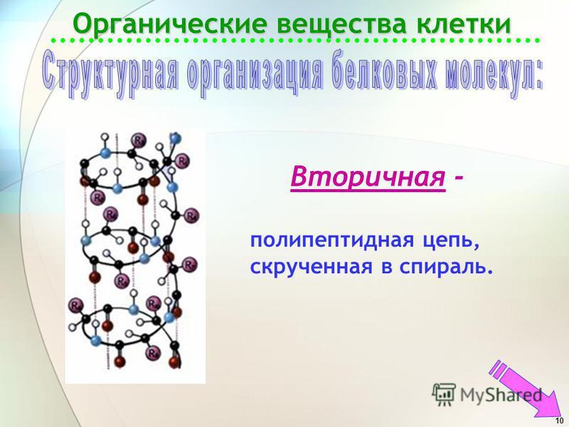 10 Органические вещества клетки Вторичная - полипептидная цепь, скрученная в спираль.