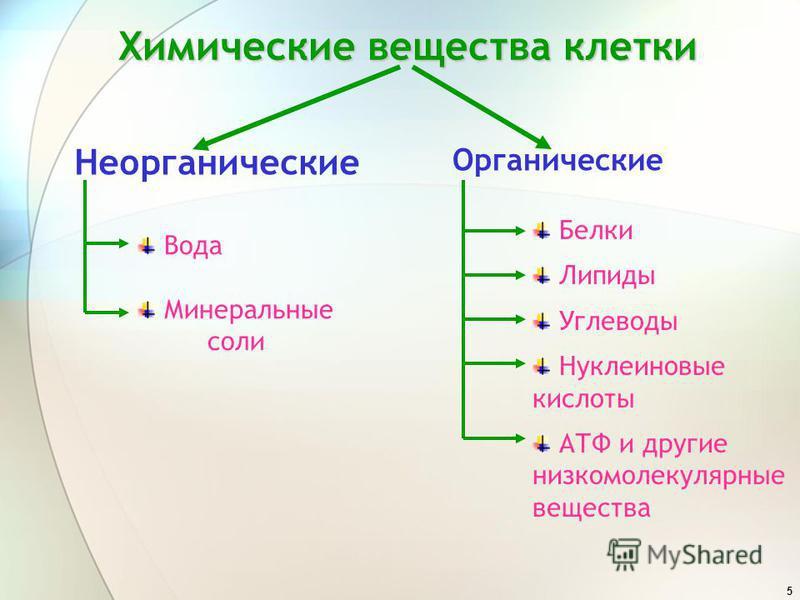5 Химические вещества клетки Органические Неорганические Вода Минеральные соли Белки Липиды Углеводы Нуклеиновые кислоты АТФ и другие низкомолекулярные вещества