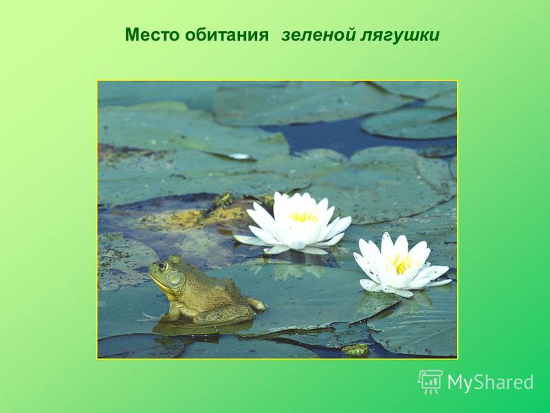 Место обитания зеленой лягушки