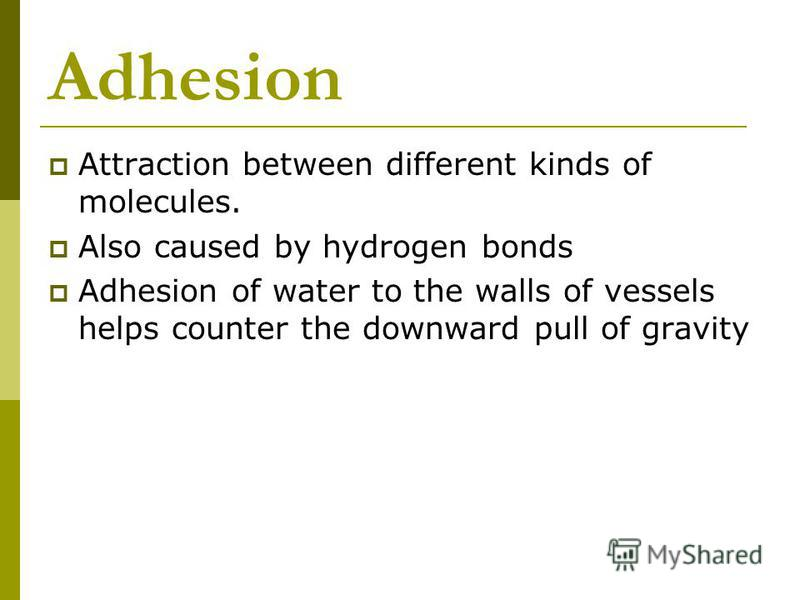 Adhesion Attraction between different kinds of molecules. Also caused by hydrogen bonds Adhesion of water to the walls of vessels helps counter the downward pull of gravity